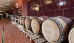 Tenuta Canto alla Moraia winery cellar with old wooden barrels in Italy