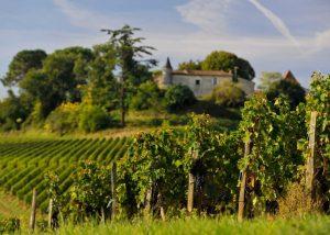 Château La Croizille - vineyards