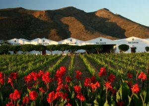 van loveren vineyard and flowers against estate in lovely south africa