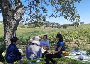 Picnic in the vineyard at Vincent Grall Vigneron