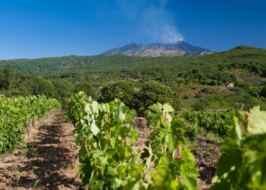Tenuta Monte Gorna vineyard overview located in Italy