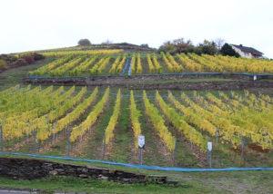 Weingut Philipps-Mühle - vineyards
