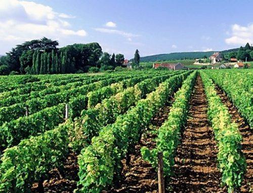 Burgundy – home of the worlds best aromatics wines