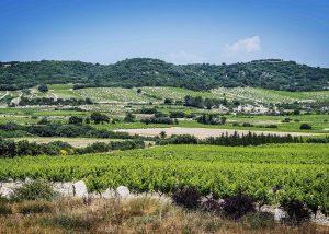 The vineyard and green hills at Domaine de la Mordorée