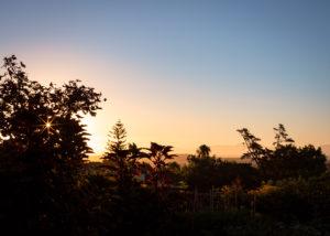 Longridge - sunset and vegetation