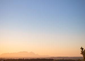 Longridge - sunset and vines