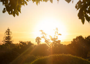 Longridge - sunset and trees