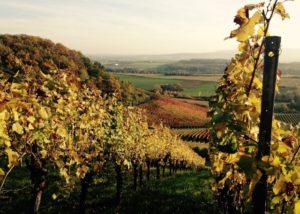 weingärtner stromberg amazing and lush vineyard near winery