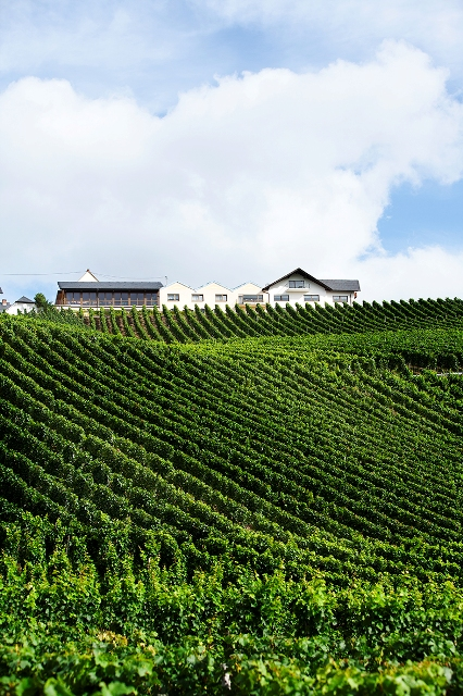 weingut karl veit slender rows of the grapevines against mansion