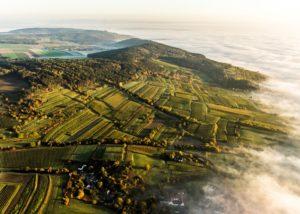 weingut tom dockner top view of the lush vineyards near winery