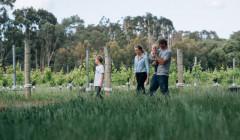 windows estate visitors walking around beautiful winery in australia