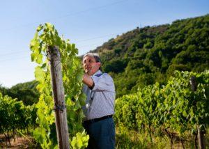Tenuta Monte Gorna winemakers working at vineyard in summer