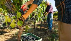 Bodega F. Schatz winemaker at work on vineyard in Spain