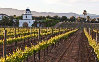 baja_california_wine_region_2