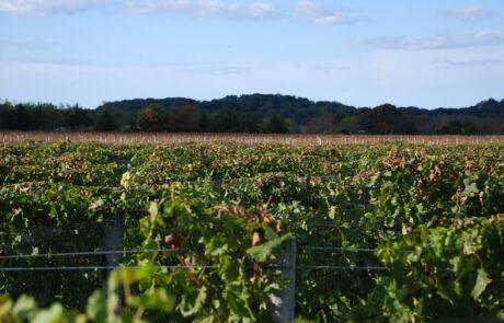 New York wine region