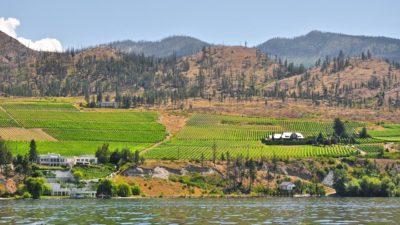 niagara_peninsula_wine_region_2