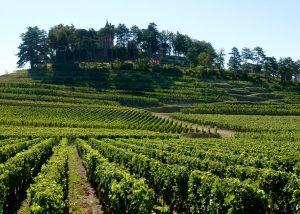 The vineyards under a blue sky at Château de Pressac in Bordeaux
