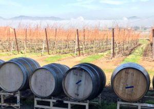 Wine barrels of the 3 steves winery