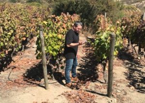 The owner of 3 steves winery in the vineyard area