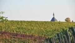 Rows of vines of Weingut Schmitt Bergtheim winery at dusk