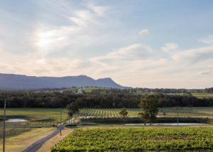 Beautiful vineyard of Allandale Winery