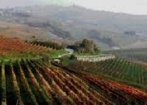Vineyard of the Az. Agr. Cortino Produttori Dianesi s.s.a winery