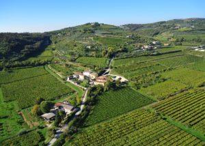 Vineyard view of the AZ. AGR. TERRE DI PIETRA SAS winery