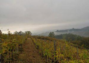 Vineyard of the azienda agricola riccardo vigna winery