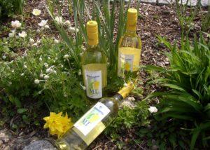 Three bottles of wine laid on ground in the vineyard of Bickensohler Weinvogtei eG winery.