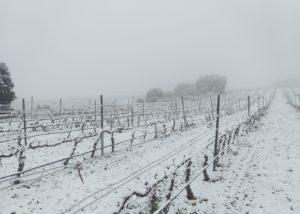 vineyard of Bodega inurrieta winery covered in snow