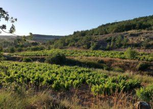 Vineyards of Bodegas ismael arroyo-valsotillo winery