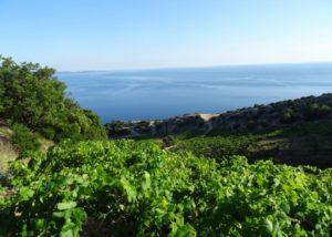 Vineyard with beautiful view at Bura Mrgudic winery
