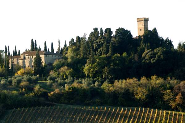 vineyard of castello sonnino
