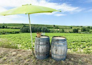 Two wine barrels beside vineyards of Celler eudald massana noya winery