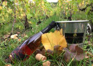 Wine bottle in the vineyard of CHAMPAGNE RÉDEMPTEUR winery