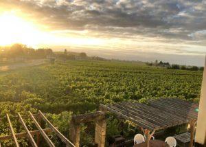 Vineyard view of the chateau La Rose Monturon winery