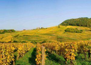 Vineyard of the Domaine BAUD - Génération 9 winery