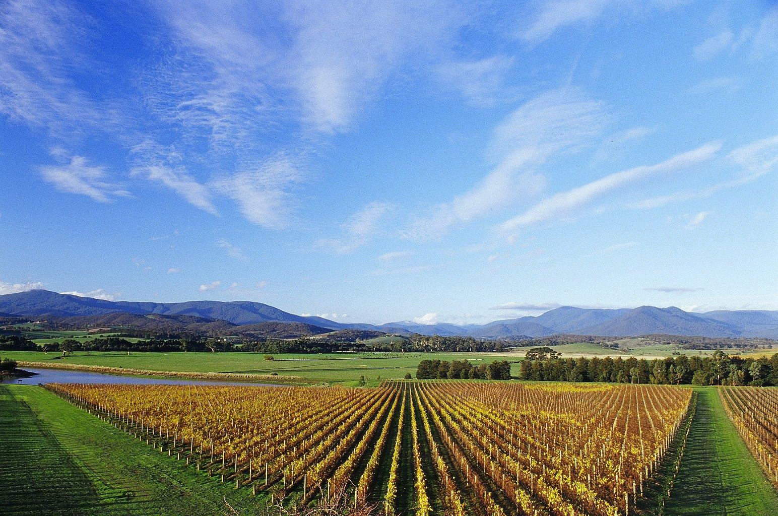 Domaine Chandon-vineyard of the Domaine Chandon winery