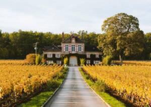 Vineyard of domaine d'ardhuy
