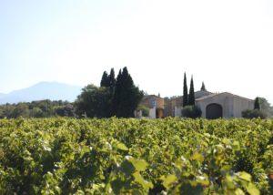 Vineyard of the Domaine de la Charbonniere winery