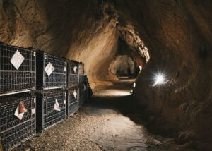 Underground cellar at Furin winery