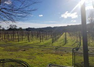 Vineyard of the Enriquez Estate wines