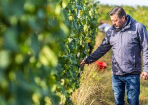 Owner in the vineyard at Etyeki Kúria Winery