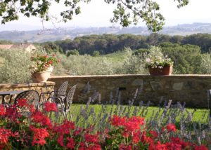 Red flowers near the vineyard of the Fattoria di Corsignano winery