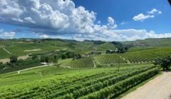 Vineyard view of the Fratelli serio & battista borgogno winery