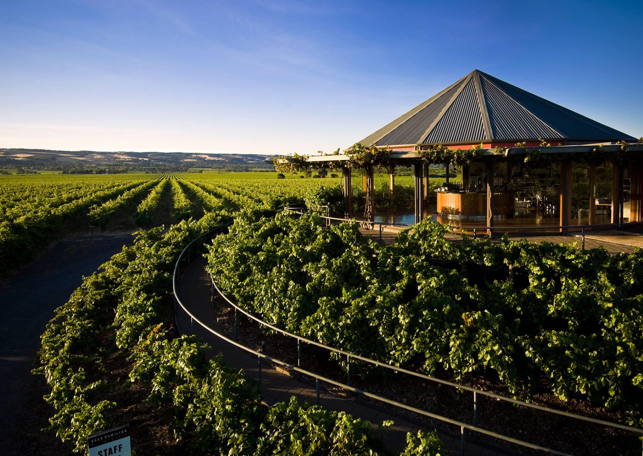 Splendid vineyard of the Hugh Hamilton Wines winery