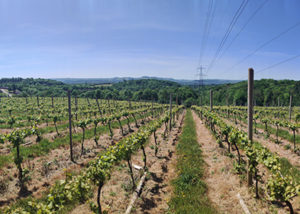 The vineyard view of the Huxbear Vineyard