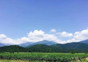 Mountain and vineyard view of Javakhishvilebis Marani winery