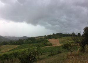 Vineyard of the La casaccia winery