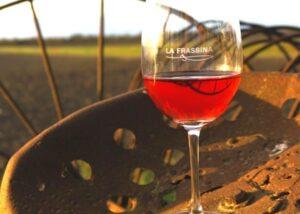 Wine tasting in the vineyard of the La frassina winery